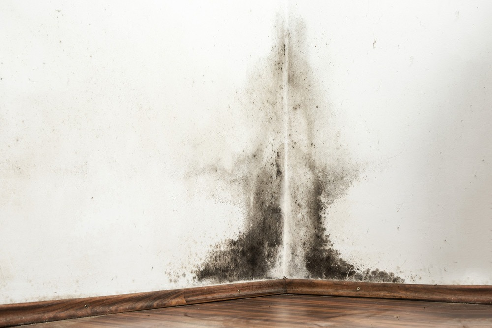 Howard Air: Types of Indoor Air Pollution in Your Home - Biologicals